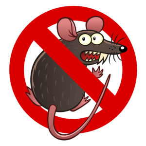 Rodent Damage Coverage for your car in Silverdale, WA